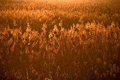 CANNETO (Lace1952) Tags: tramonto sole oro vco canneto nikkor18200vr fondotoce nikond300 lagomagggiore