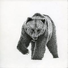 (miri orenstein) Tags: bear pen