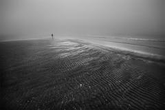 Clams searcher (Effe.Effe) Tags: sea bw mist beach monochrome fog sand mare riva shoreline bn ripples nebbia spiaggia vongole sabbia almejas palourdes venusmuscheln
