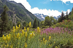 Cogne (beppeverge) Tags: light sky italy panorama mountains alps color green nature montagne canon landscape geotagged photography eos photo europe italia photos  natura valley alpi paesaggio monti valli cogne pendii vallate beppeverge