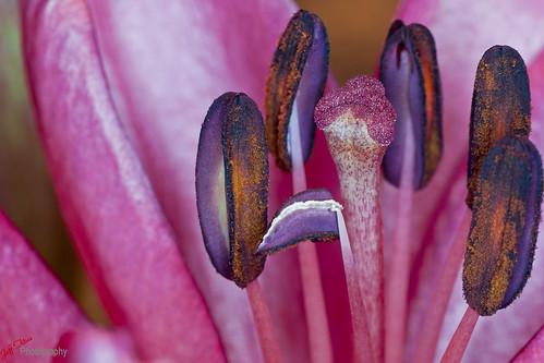 Macro Flowers-002