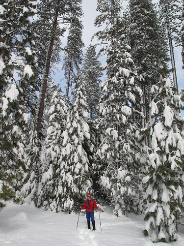 Snowshoeing in the California Sierras