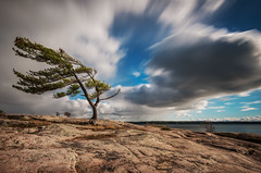 Big puffy clouds at Killbear Provincial Park (angie_1964) Tags: puffy cloud killbear pine wind georgianbay provincial park ontario canada sky nature landscape water nikond800e explore