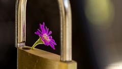 Freedom. (ChusPS) Tags: macromondays relaxation macro closeup nikon tamron90mm