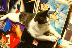 Taksim'de kitapçı kedileri (nilgun erzik) Tags: cat istanbul resting taksim kedi lps fotografkıraathanesi fotografca biyerlerde haziran2010