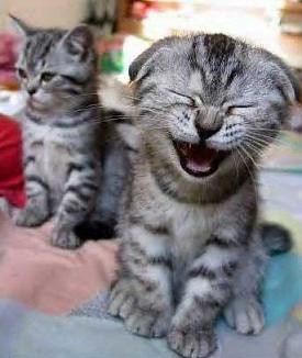 laughter-funny-cat-laugh (1)
