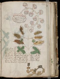 Voynich Manuscript Page104.jpg