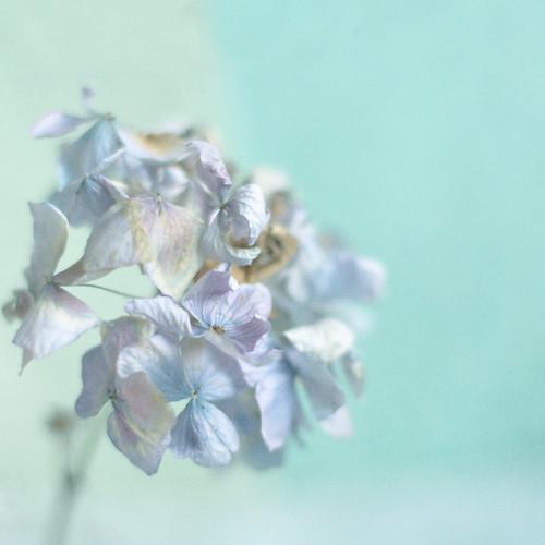 Pastel blue Monday