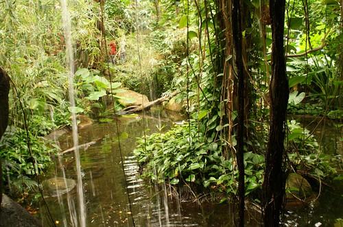 Faux Rain Forest