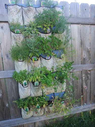 Herb Garden 7/1/2010