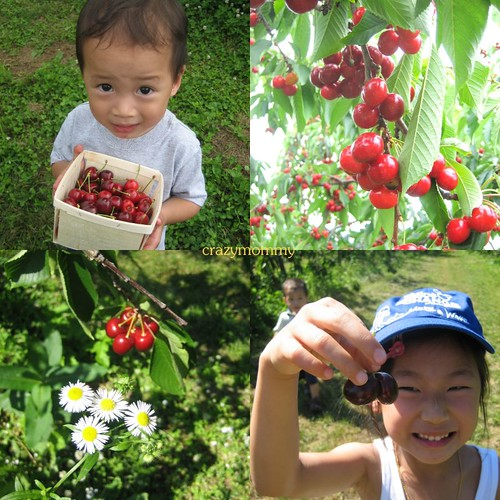 Cherry Picking Trip
