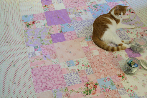 Kitty on quilt