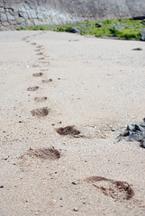 beach footprints (weekenderincornwall) Tags: falmouth visitwithdan april2010