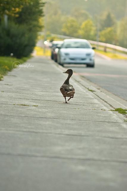 quack! day 187 (4)