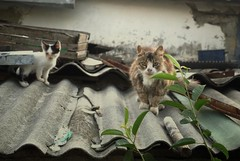 The Family of Cats (Jenya Semyonov) Tags: old cat villlage oldthings