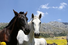 horse andalucia. Spain (king David Israel) Tags: sky italy horse patagonia white holland colour argentina field animals canon landscape caballo spain nikon pentax olympus