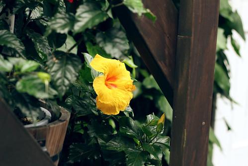 bunga raya!!