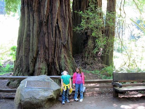 Muir Woods 20100624