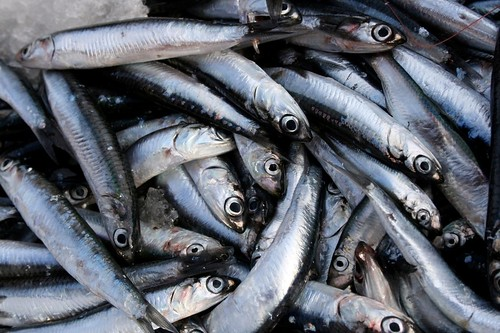 Introduction to Anchovies