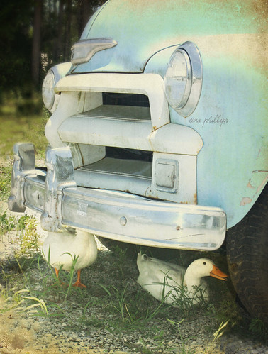 A Duck and His Truck