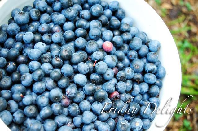 blu berry
