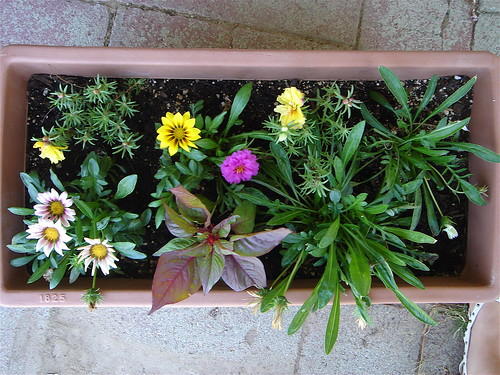 flower box two