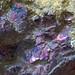 Rock365 : 18 07 2010 : Covellite