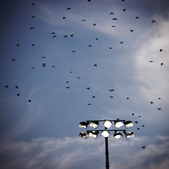 As A Crow FIies (Jaypiddy) Tags: vancouver baseball stadium nat bailey canadians