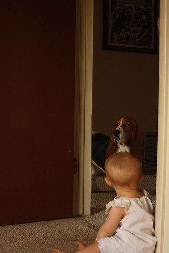 Beauty and the Basset