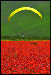 ...landing... (zio.paperino) Tags: travel flowers red italy holiday man flores color verde green nature fleur colors yellow fleurs geotagged rouge fly nikon europa europe italia flight july natura landing volo giallo poppy paragliding fiori nikkor rosso umbria papaveri parapente 80200 castelluccio parapendio naturesfinest d90 mywinners platinumheartaward ziopaperino mygearandme mygearandmepremium mygearandmebronze mygearandmesilver mygearandmegold mygearandmeplatinum ringexcellence