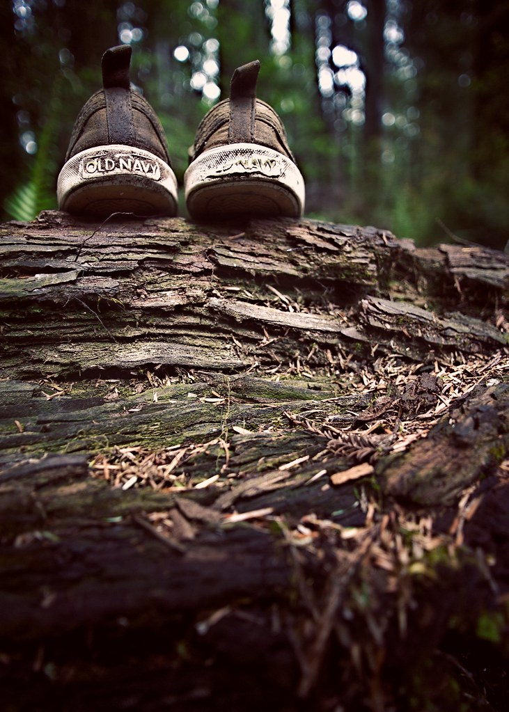 shoes. on a log. in a forest.