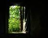 Window To The World (ICT_photo) Tags: window fire curtain abandon damaged tattered ictphoto ianthomasguelphontario