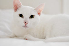 (Danielle Pearce) Tags: pink light sun white green cat bed eyes nikon kitten room sleepy twitter d5000 gettyimageswants