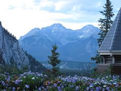 Banff Springs Hotel (sunnyfunnyyellow) Tags: canada mountains rockies alberta banff banffnationalpark banffspringshotel farimont