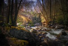 Gatlinburg Stream (Explored 7-22-2010)
