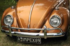 Elle a de bien beaux yeux celle-l! (Photographe Basilique-cathdrale-N-D-Qubec) Tags: orange brun contrastes focale tnbreux torsades brindilles