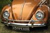 Elle a de bien beaux yeux celle-là! (Photographe Basilique-cathédrale-N-D-Québec) Tags: orange brun contrastes focale ténébreux torsades brindilles