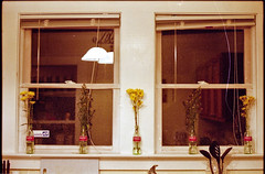 Bonaventure windows (dangerismycat) Tags: flowers atlanta windows film 35mm georgia 135 cokebottles ae1program