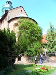 der 1000 jhrige Rosenstock (regenmond) Tags: germany dom samsung digitalcamera hildesheim rosenstock