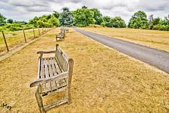 Thames Bank (Muzammil (Moz)) Tags: uk london bench fisheye riverthames moz royalbotanicalgardens kewgarden thamesbank muzammilhussain