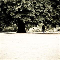 roads (zecaruso) Tags: park england parco man tree london uomo hydepark albero londra inghilterra zeca 500x500 blueribbonwinner nikond300 zecaruso cicciocaruso theauthorsclub ze² gigilivornosfriends