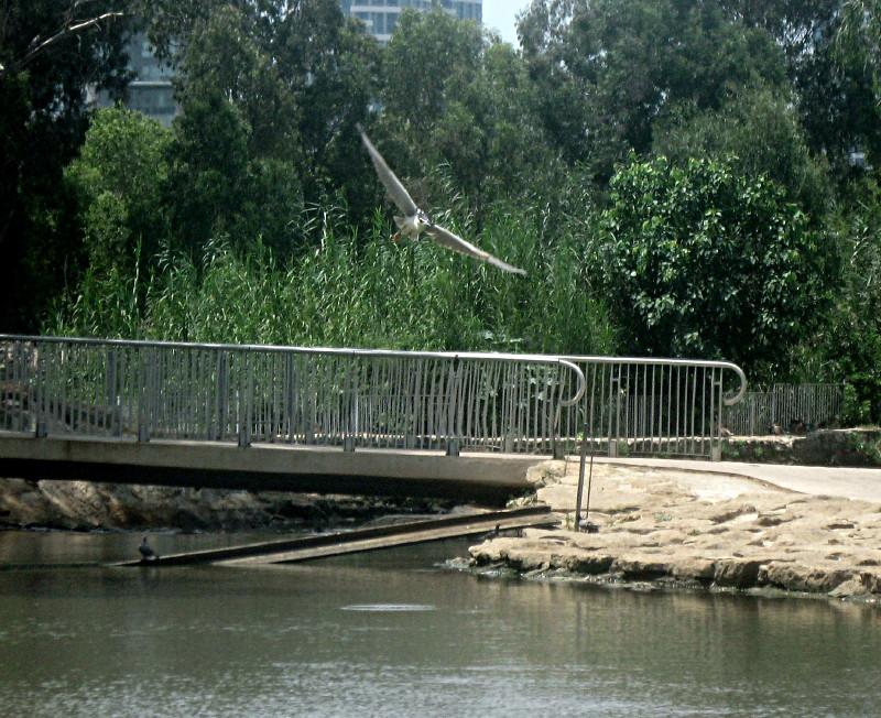 31-07-2010-heron