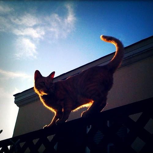 Life:  Circus Cat