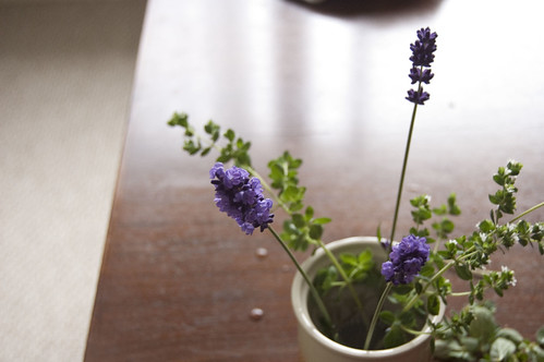 lavender, oregano