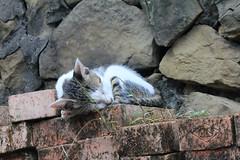 IMG_0528 () Tags: taiwan taipei    taipeicounty   houtong    catvillage rueifangtownship houtongcatstreet