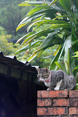 IMG_0530 () Tags: taiwan taipei    taipeicounty   houtong    catvillage rueifangtownship houtongcatstreet