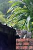 IMG_0530 (翔志) Tags: taiwan taipei 台灣 台北 貓 taipeicounty 台北縣 侯硐 houtong 猴硐 瑞芳鎮 貓村 catvillage rueifangtownship houtongcatstreet 百貓街