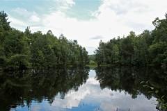 moor II (la_terri) Tags: see flickr spiegel himmel moor wald bume schatten spiegelung schwarzwald