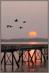 Fiery Sun at Sidney-By-the-Sea (TT_MAC) Tags: seascape sunrise landscape pier sidneybc sidneybythesea firehazesky