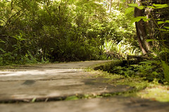 Perspective (mgier photography) Tags: old trees summer green rainforest vancouverisland boardwalk lush canopy majestic 2010 pacificrimnationalpark creaking